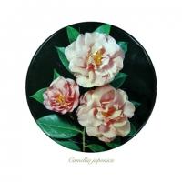 Liz Parkinson - Camellia japonica