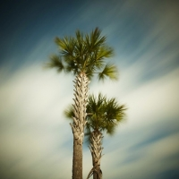 David Ellingsen - The Gulf of Mexico #69, Gulf Drive Palms