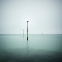 David Ellingsen - The Gulf of Mexico #5, Seabirds