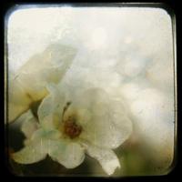 Charlene Serdan - In a Rose Garden