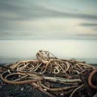 David Ellingsen - Salish Sea, Study 2 #59