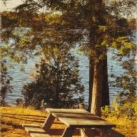Patrick Lajoie - Park Picnic