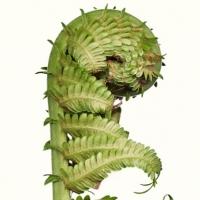 Graeme Coxon - Fern detail