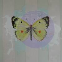 Mary Lottridge - Clouded Yellow