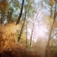 Dominic Pote - The Ornamental Road