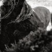 Karen Whylie - Dark Horse
