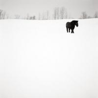 Karen Whylie - Horse in Field