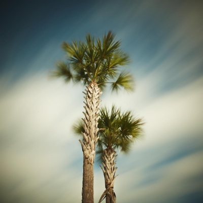 David Ellingsen - The Gulf of Mexico #69, Gulf Drive Palms