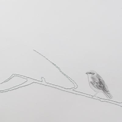 Diliana Popova - Sage Sparrow