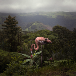 Pat  Swain - A Lost Flamingo Curious about a Flower