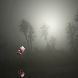 Pat  Swain - A Lost Flamingo on a Street in the Fog