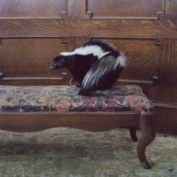 Maureen O'Connor - Portrait of a Skunk