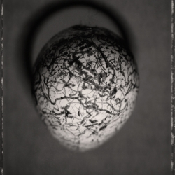 David Ellingsen - Common Murre Egg 1