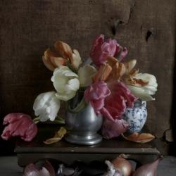Kristin  Sjaarda - Still Life (Tulips and Onion)