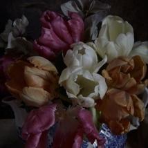 Kristin  Sjaarda - Tulips (detail 1)