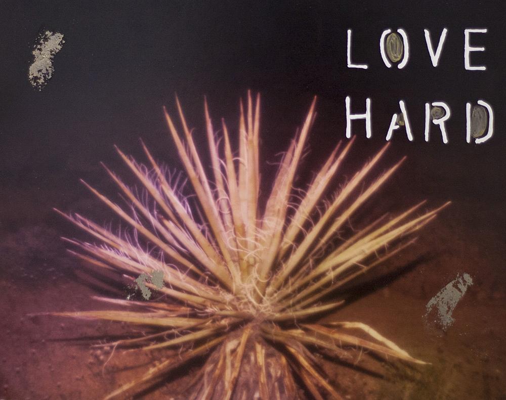 Love Hard  by Talia Shipman