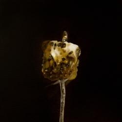 Erin Rothstein - Tasting Room - Burnt Marshmallow