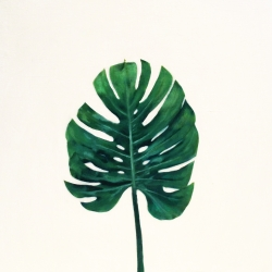 EM Vincent - Plant 1