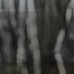 Swavek Sienkiewicz - Lost in Muskoka 1
