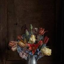 Kristin  Sjaarda - Tulips