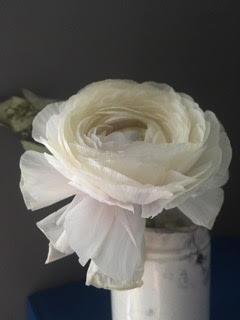 White Ranunculus by Kristin  Sjaarda