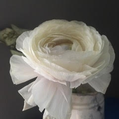 Kristin  Sjaarda - White Ranunculus