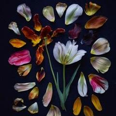 Kristin  Sjaarda - Tulip Petals 2017