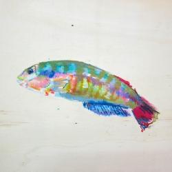 Agnieszka Foltyn - Tropische Fische