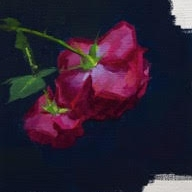 Caroline Ji - Roses from Sonia
