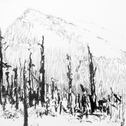 Maria  Josenhans - Burnt Trees