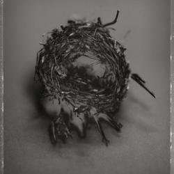 David Ellingsen - Cup Nest No.1