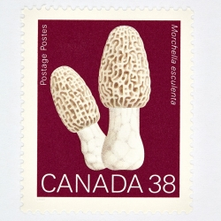 Peter Andrew - Canada 38 Mushroom Stamp (Red)
