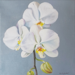 Emily Bickell - Phalaenopsis (square)