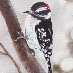 Emily Bickell - Downy Woodpecker
