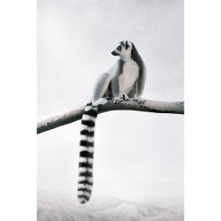 Alice  Zilberberg - Laid Back Lemur