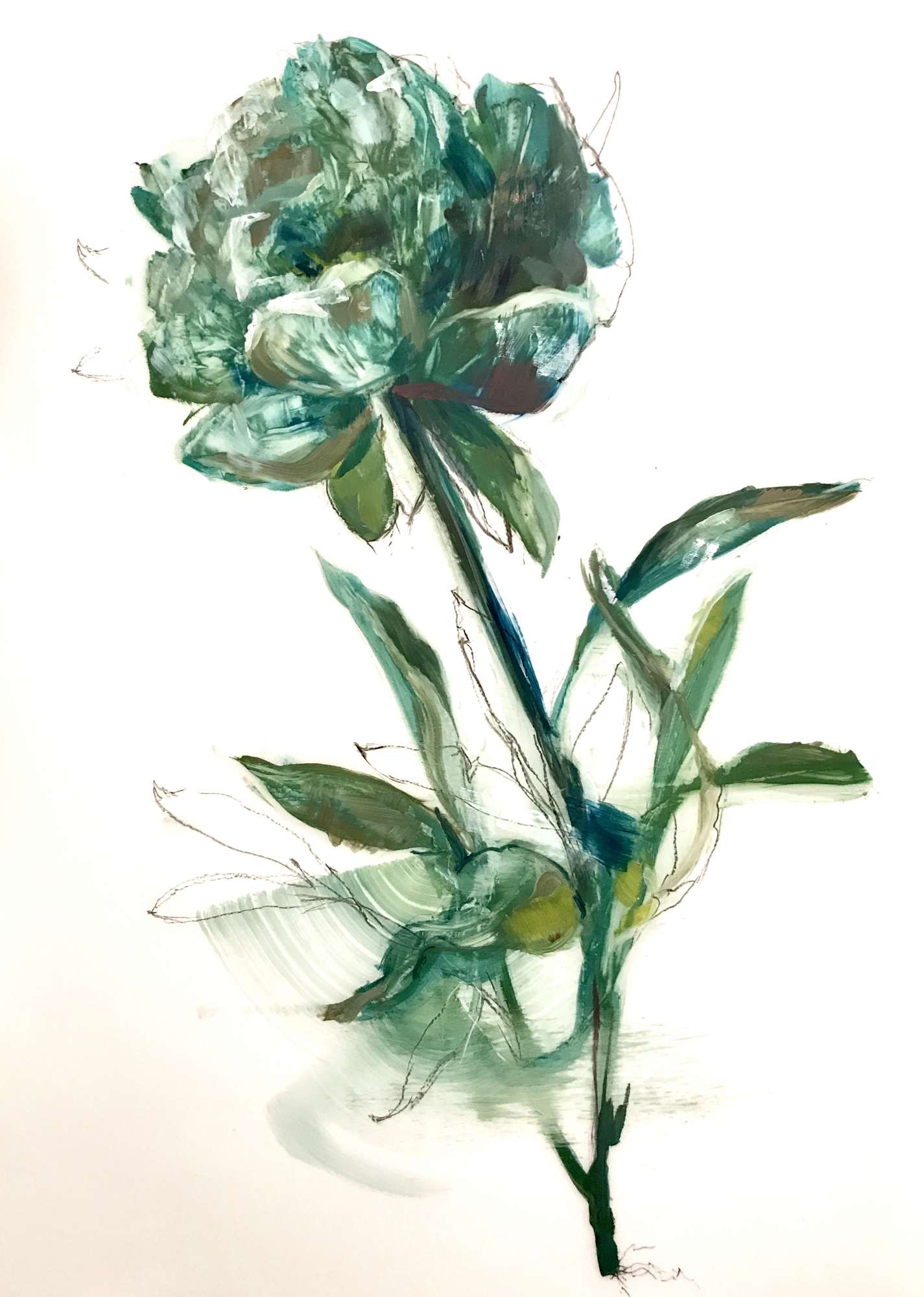 Teal Peony 2018- 2 by Madeleine Lamont