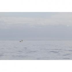 Cody  Greco  - Gulf of Mexico