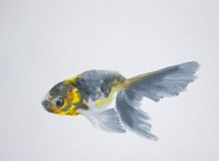 Goldfish 5 by Agnieszka Foltyn