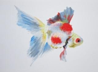 Goldfish 10 by Agnieszka Foltyn