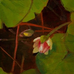 Waterlily 4 by Caroline Ji