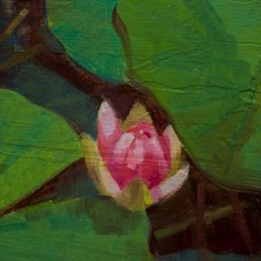 Waterlily 5 by Caroline Ji