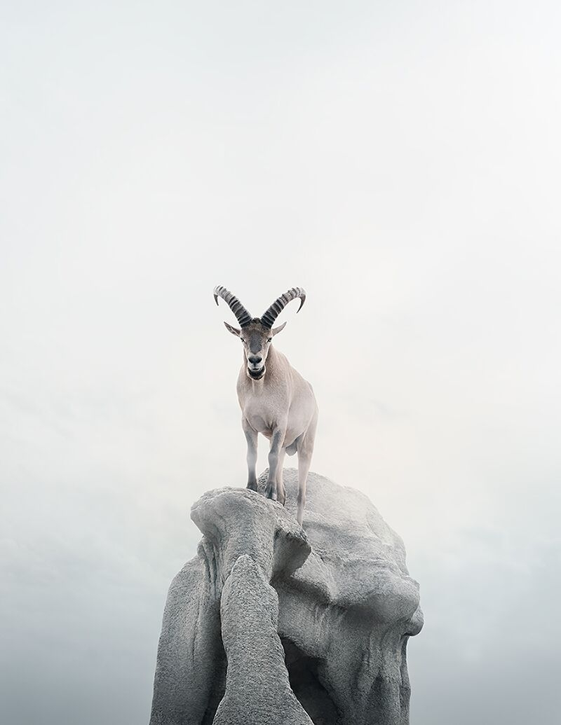 Intent Ibex  by Alice  Zilberberg