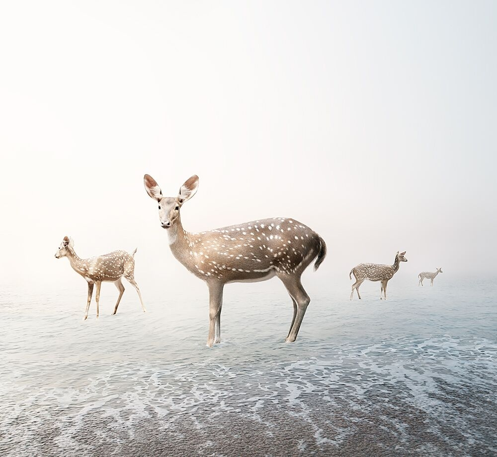 Stay My Deer  by Alice  Zilberberg