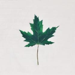 EM Vincent - Green Leaf