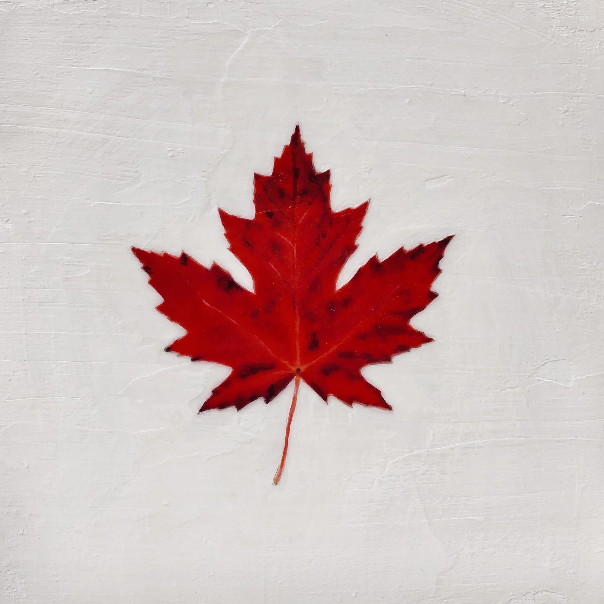 Red Leaf  by EM Vincent