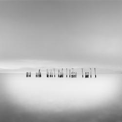 David Ellingsen - Seabirds