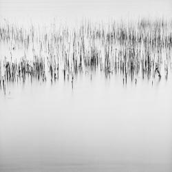 David Ellingsen - River Delta, Study #2