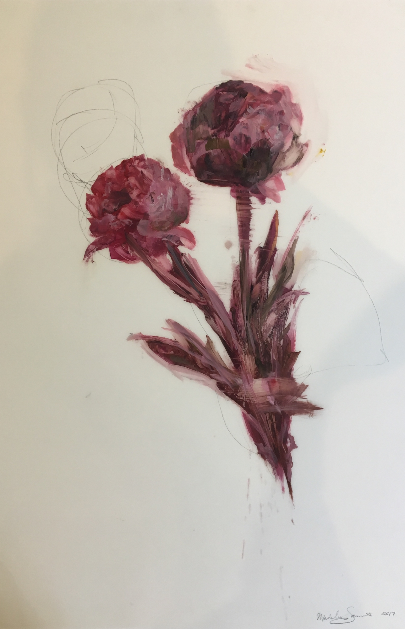 Pink Peonies  by Madeleine Lamont