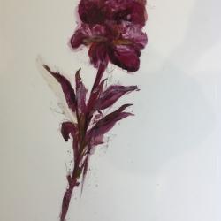 Madeleine Lamont - Purple Peony 2016