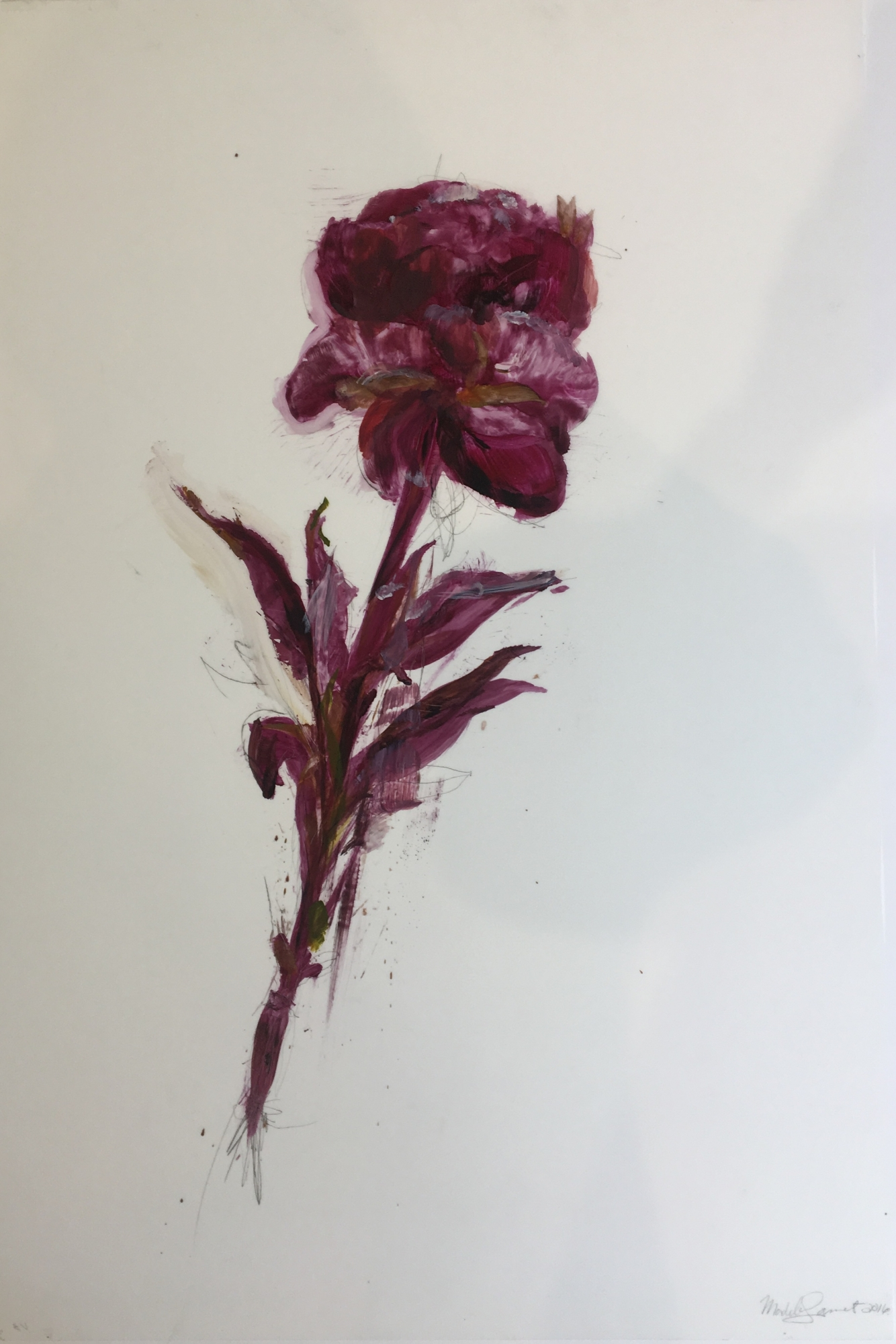 Purple Peony 2016  by Madeleine Lamont